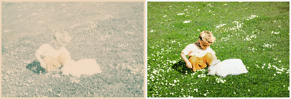 Example of a faded photo of a female child patting a fluffy white rabbit in a meadow, displaying before and after pictures of the completed Color Restoration of a black and white photo.